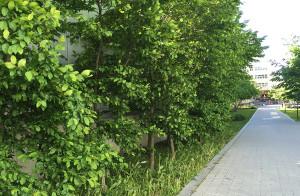 Vegetation in city.